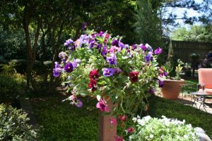 Garden 5-21 (800x533)