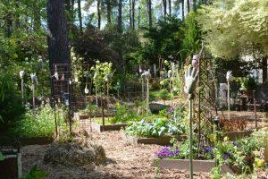 Garden 5-4 (800x533)