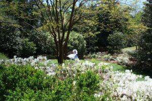 Garden 7-6 (800x533)